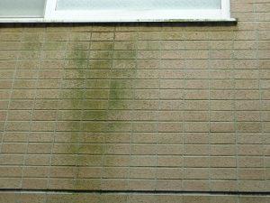 外壁汚れ1