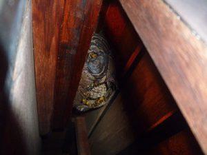 ハチの巣 戸袋